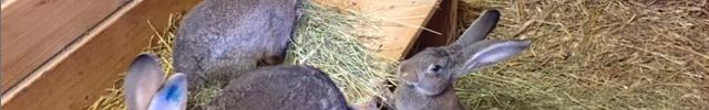 Tiere Stall für Kinder in Zürich