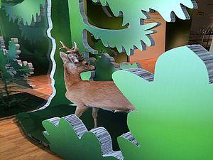 """""""Wild auf Wald"""" - Sonderausstellung im Naturama"""