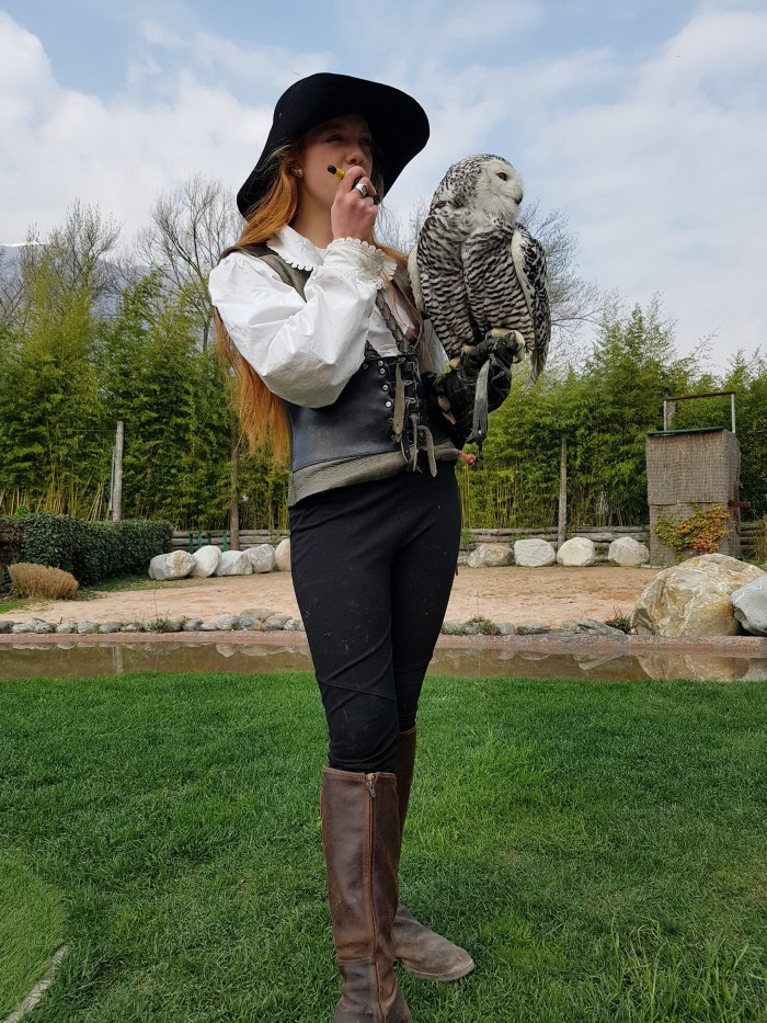Falconry Switzerland