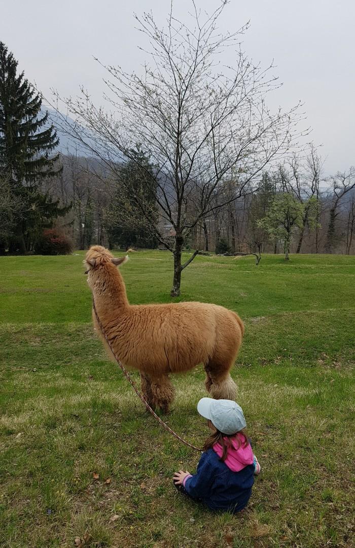 llama family adventure Ticino