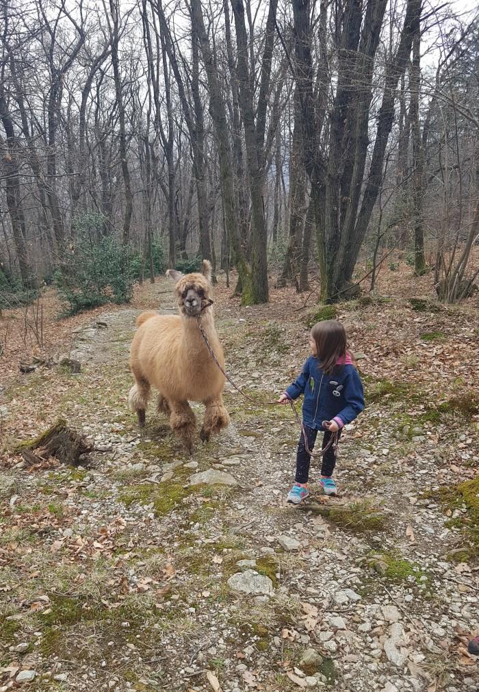 Lama-Trekking Tessin