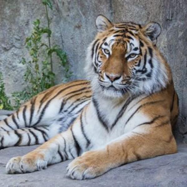 Familienführung: Löwe, Tiger und Co