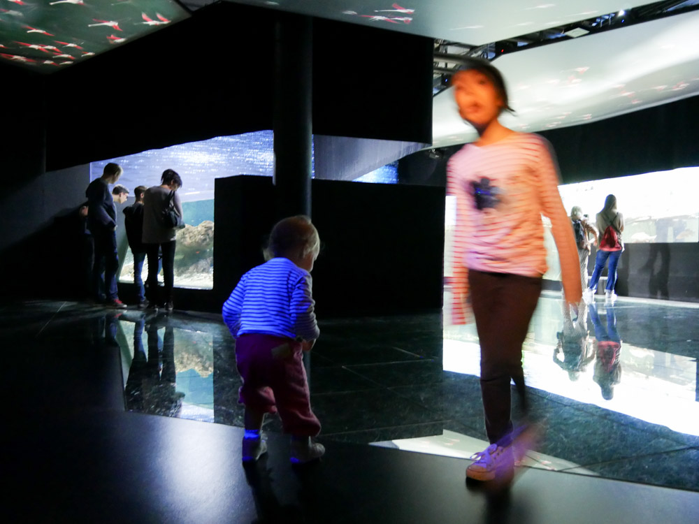 Aquatis in Lausanne mit Familien erleben