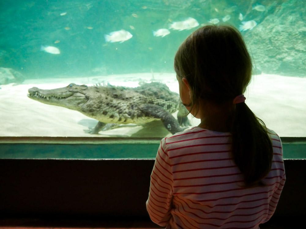 Aquatis in Lausanne mit Kindern erleben