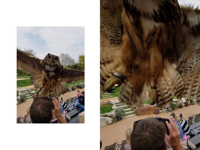 Falconry show Ticino Switzerland